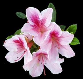 kvetiny_cervene (58)